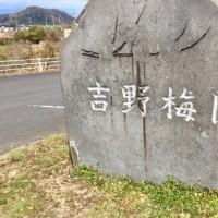 春を感じに 大分市吉野梅園へ てくてく〜〜