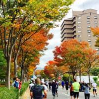秋を感じた諏訪湖マラソン
