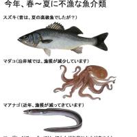 今年、好漁な魚介類・不漁な魚介類(初夏)