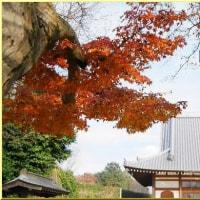 晩秋の万福寺