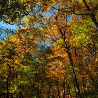 赤城山 / 前橋市 ‐ 木の葉舞う - 紅葉 大沼湖畔等