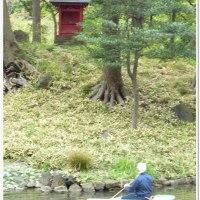 東京小石川後楽園 & 礫川公園散策 ★ 健康ウオーキングとカメラ撮りの学習★