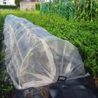 周年栽培中のキャベツ 植え付けと収穫