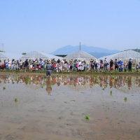 田植え体験2017を開催しました。