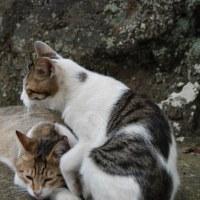 品川東大井 猫二匹