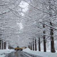 雪ちゃん、ありがとう♪ でも、頑張りすぎです・・・(笑)
