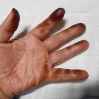 蕗は淡い緑わが手は真っ黒