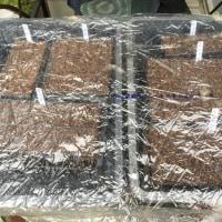 春野菜のポット植え