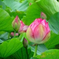 万博の日本庭園