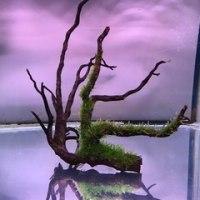 南米ウィローモス付き流木🍀