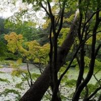 雨音がしています・・今日の長谷池