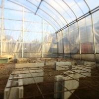 温室片付け、育苗開始へ。
