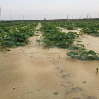 浮き草の多い田んぼ