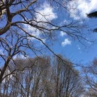 白樺~青ぞ~ら♪ 北国の春