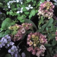 春いろの花たち