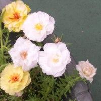 テラスの花  17