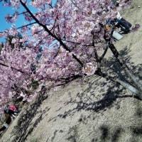 脳ウハウハ ははははは~(*^。^*) 春が来た。