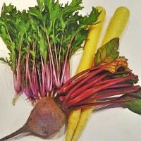 「立川野菜」を使った「うど稲荷ずし」の付け合せを考える