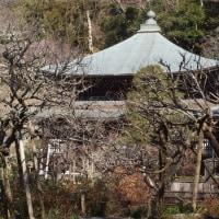 鎌倉へ観梅に