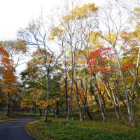 遅れて見頃を迎えた紅葉 萩の里自然公園 2016