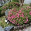 初夏の庭風景
