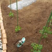 次女が小さな家庭菜園始めました