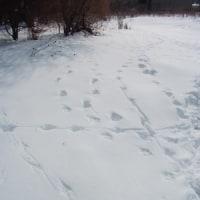 冬の軽井沢2 誰の足跡?