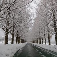 今日も雪です