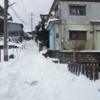 厳寒の中、ちょっと長めの散歩へ・・・②