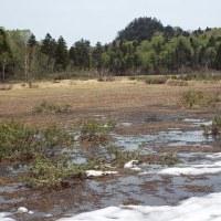 5月22日新緑満喫!「雪解けの長沼へ」下見に行きました。