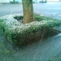 まさかの「雪」