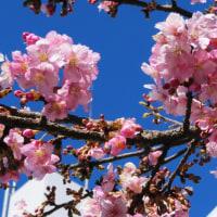 前期日程の試験日は、河津桜が咲く穏やかな日和になりました