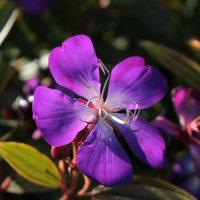 デジカメ講座~亜熱帯植物園