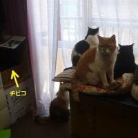 猫のバードウォッチング