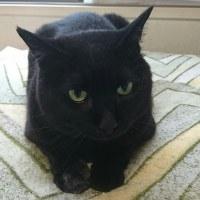 黒猫のくるみちゃんのDo-up写真