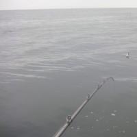 思いつき釣行。