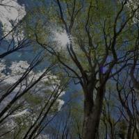 芽吹きの森へ
