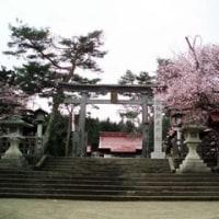 網走神社の桜