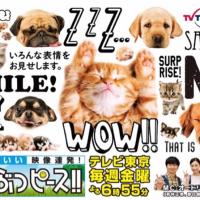 テレビ東京さん「どうぶつピース‼︎」出演のお知らせ