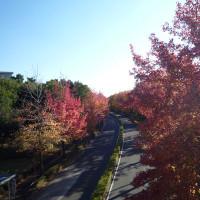 バス通りの紅葉