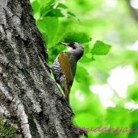 自然公園(野鳥フォトー82)