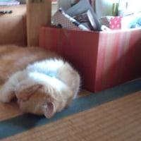 畳の上に転がってました