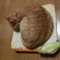 食パンクッションと魚キッカー
