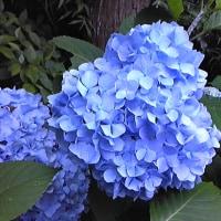 北鎌倉、紫陽花と鉄の知的散策