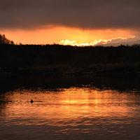 富士山が見えなかった精進湖の朝(涙)