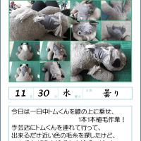 161130 ぬいぐるみ再生 『 トムくん 』 植毛の巻!