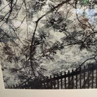 半田山植物園写真コンテスト 2017.01.06 「292」