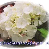 紫陽花シリーズ2