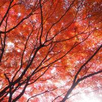 名古屋市東区の禅隆寺の紅葉です。