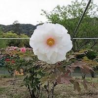 「花の季節を」